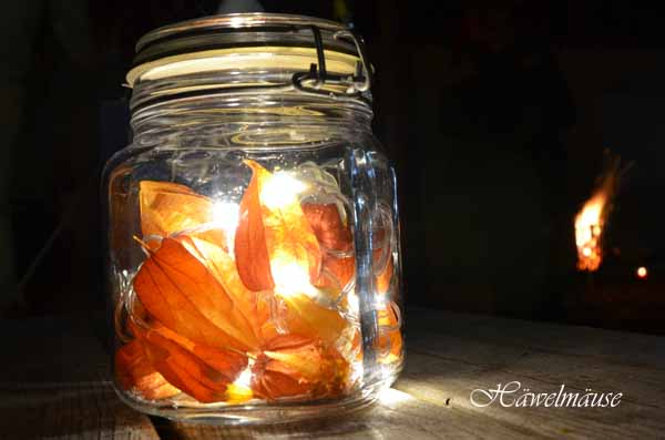 Lampionfrucht