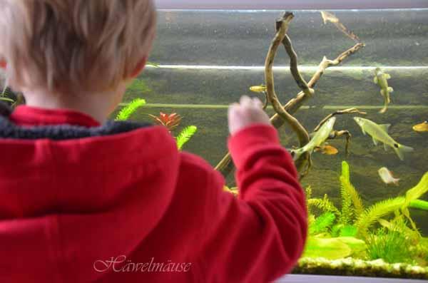 Aquarium Sohn