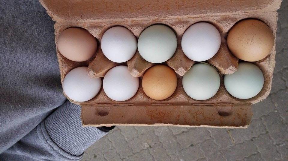 Eier vom Bauern